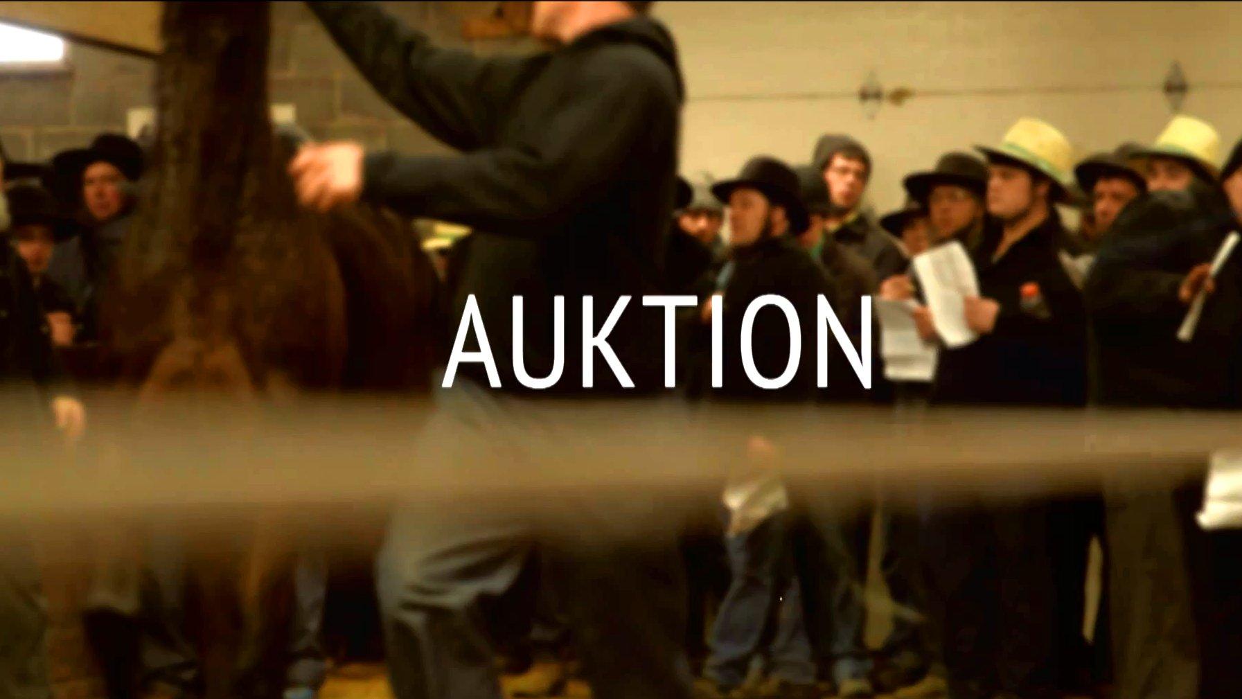 Eine Pferdeauktion in Berlin, Ohio.