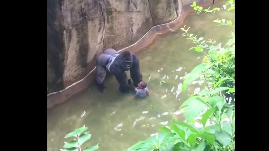 Gorilla erschossen im Zoo Cincinnati