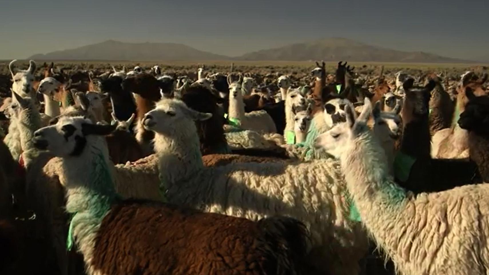 dbate.de_Screenshot_WWBerlin_Bolivien_Teil 1_2014
