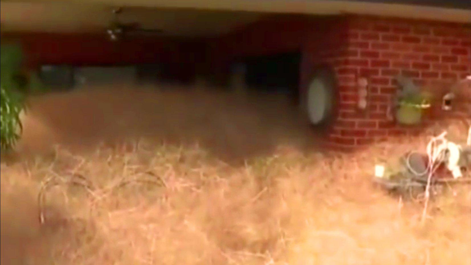 Gras-Plage in Australien, 2016 (Video)