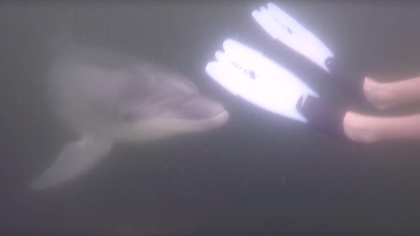 Delfin in Kieler Bucht wird zur Attraktion