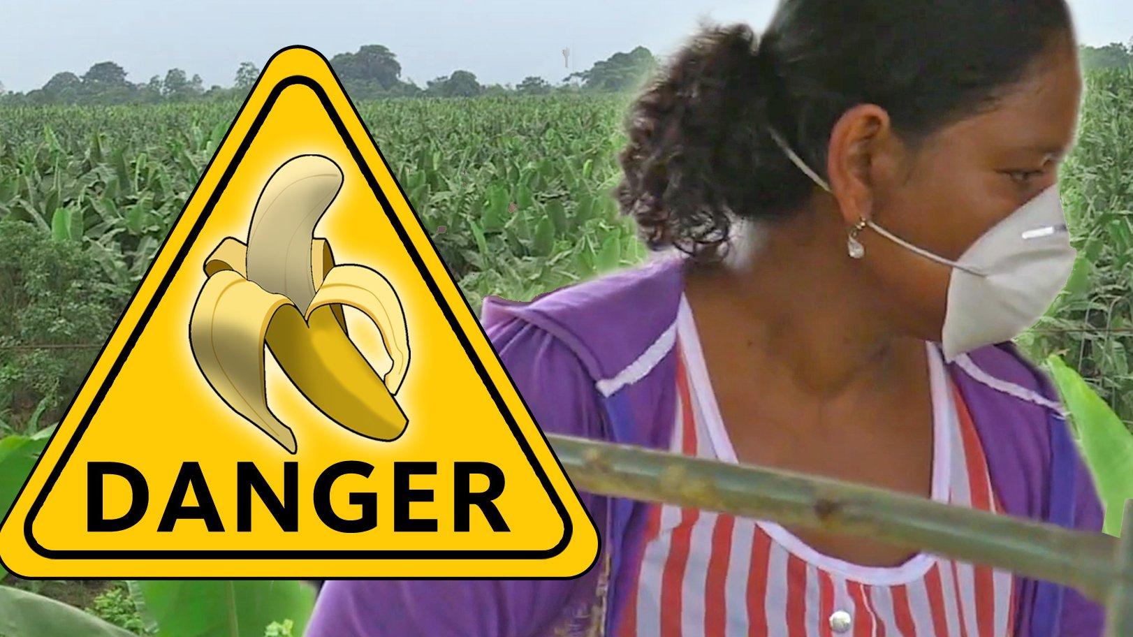 Die schmutzige Wahrheit über Bananen (probono Magazin)